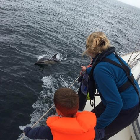 dolphins_cornwall_sailing
