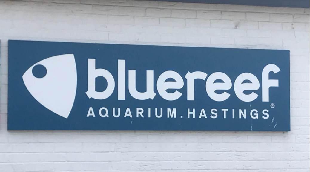 blue_reef_aquarium_hastings_diving_shewhosails