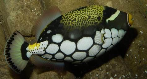ocean_tank_aquarium_hastings
