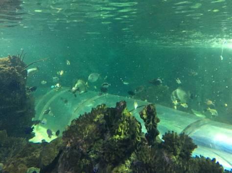 shark_diving_hastings