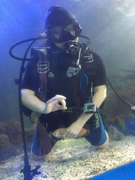 shark_diving_sam_mcclements